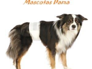 Pañales para perro macho, S-M, 30-46 cm, 12 uds/medidas disponibles