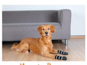 calcetines antideslizantes para perro