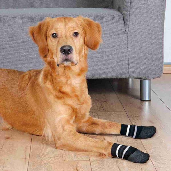 Calcetines Perro