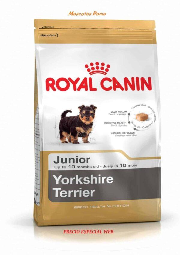 Yorkshire Terrier junior