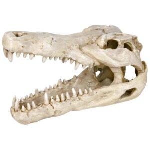 Cráneo de Cocodrilo resina poliéster resistente al agua salada