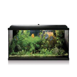 Tecnología LED y un diseño exclusivo son los distintivos en nuestros acuarios AQUA-LED PRO. El Kit BASE incluye*: filtro interior, pantalla integrada, lámpara LED, alimento para peces, acondicionadores, termómetro, termocalentador (excepto algunos modelos) y guía del acuario.