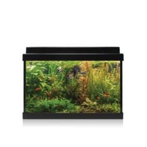 Los kit AQUA-LED son el kit más completo del mercado, con el objetivo de facilitar la iniciación a la acuario-filia incluyendo todo lo necesario para empezar un acuario desde cero.