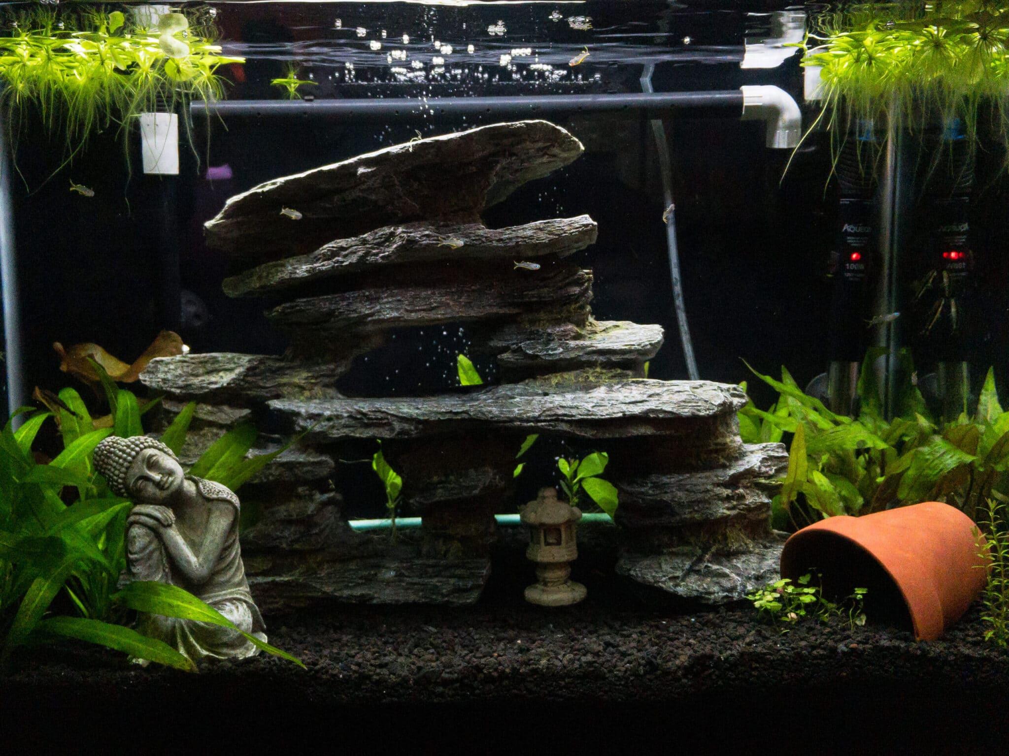 acuarios y sus tipos